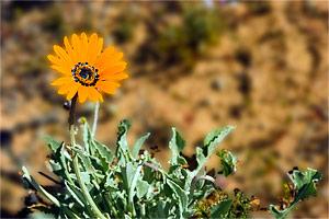 Bloemen, Geel Oranje